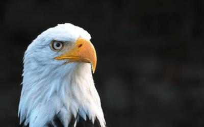 Fundamental Analysis: The Eagle Turns Dovish?